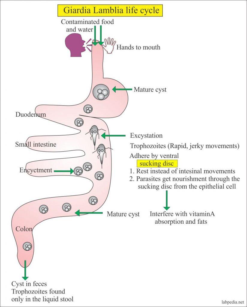 enterobiosis a kertben, mennyire működik