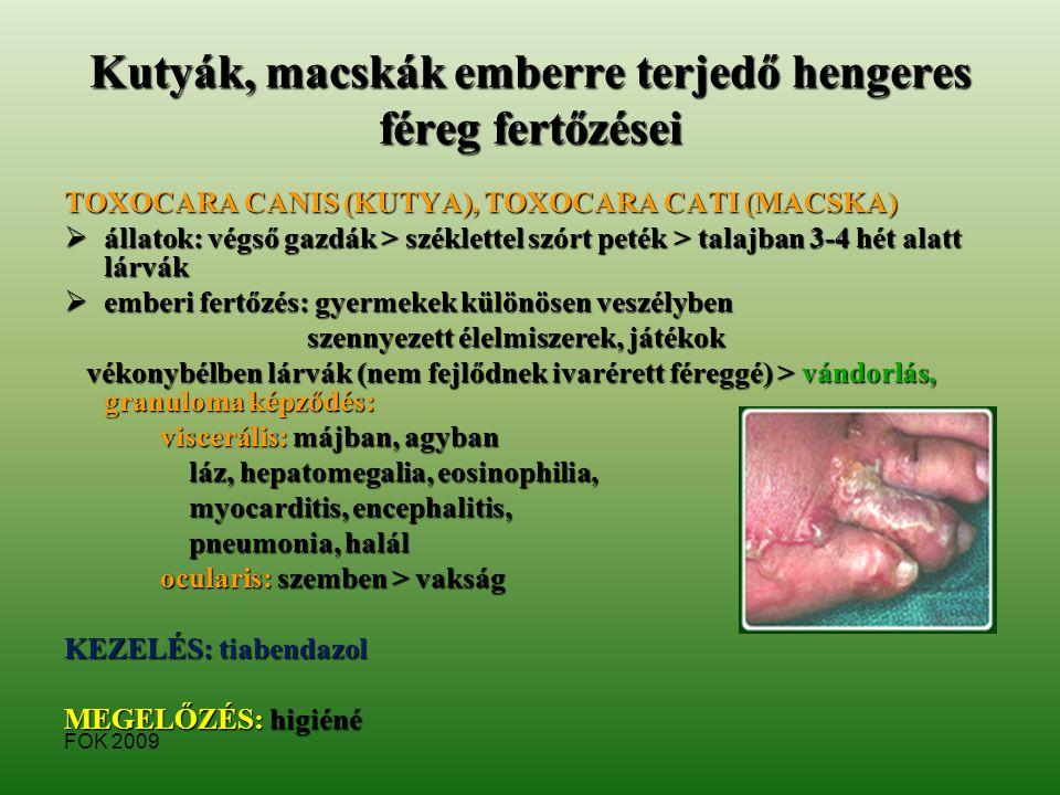 emberi gégepapilloma helmintox must