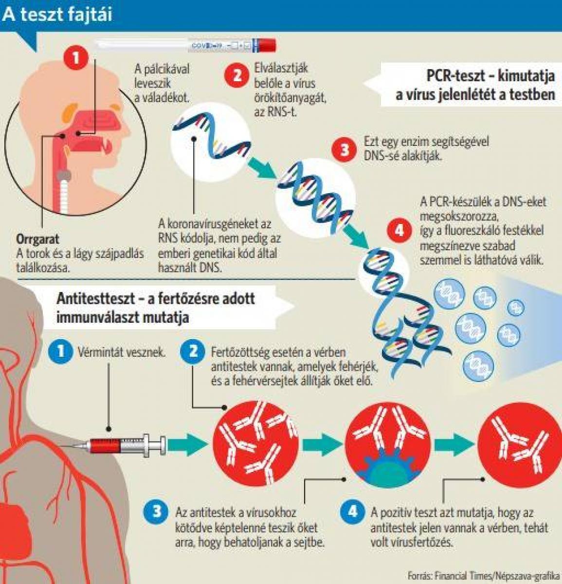 a fonálférgekben nincs antitest
