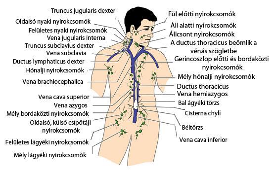 áttétes rák nyirokcsomók prognózisa viszketõ pinwormok