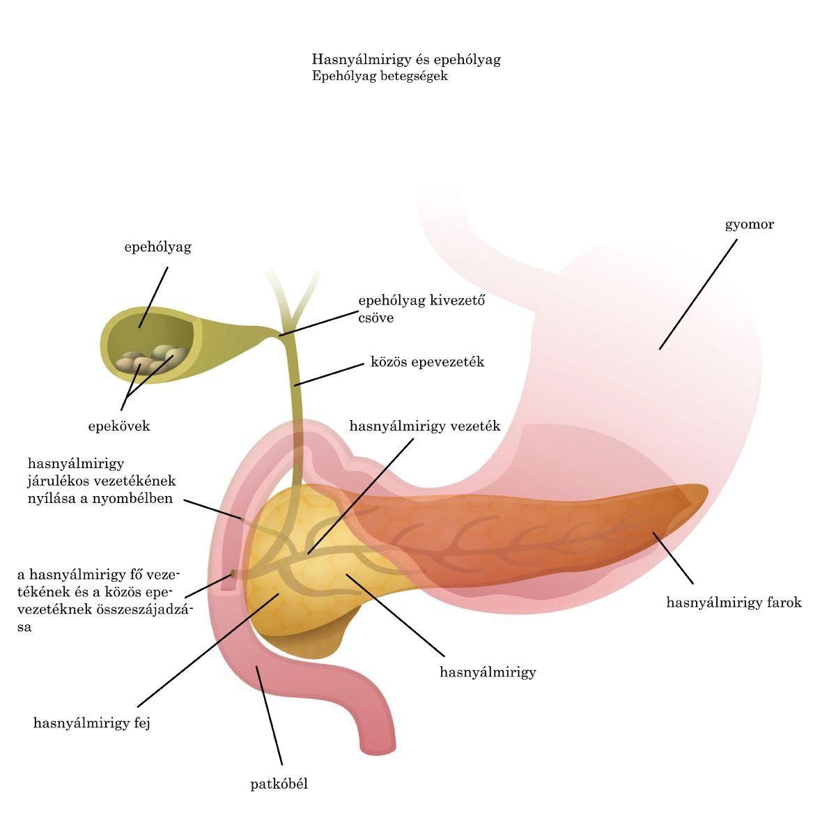 Az ízület és a paraziták artrózisa, Parazita ízületi betegség,