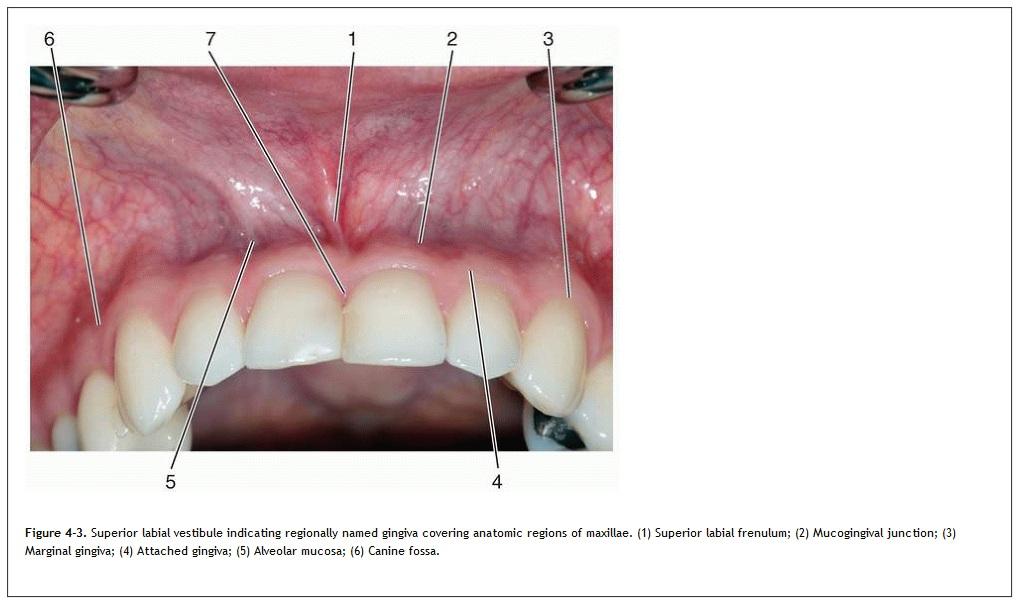 a papilloma a szájban, mivel eliminálódik