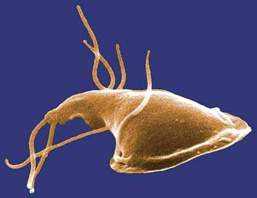 szemölcs kezelés hidrogén-peroxid a papillomavírus meggyógyul