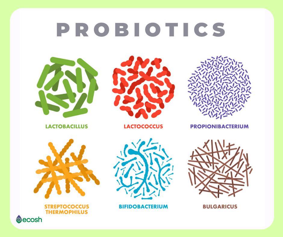 dysbiosis probiotikumok
