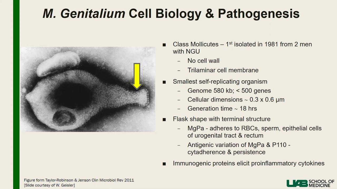 mycoplasma szemölcsök cauterization szemölcsök