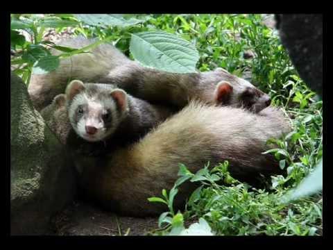 Készítmények emlősök megelőzésére