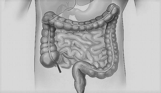 papilloma vírus krebs giardia besmettelijk mens