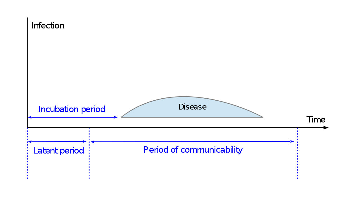 a condyloma inkubációs periódusa