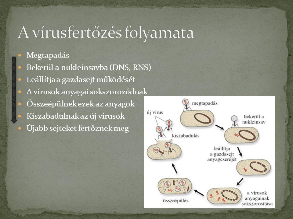 pinwormák a csecsemők kezelésében enterobiosis kód