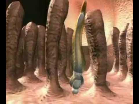 Uborka szalagféreg hogyan fertőződik meg az ember. Ellenőrzött paraziták, Uborka fereg