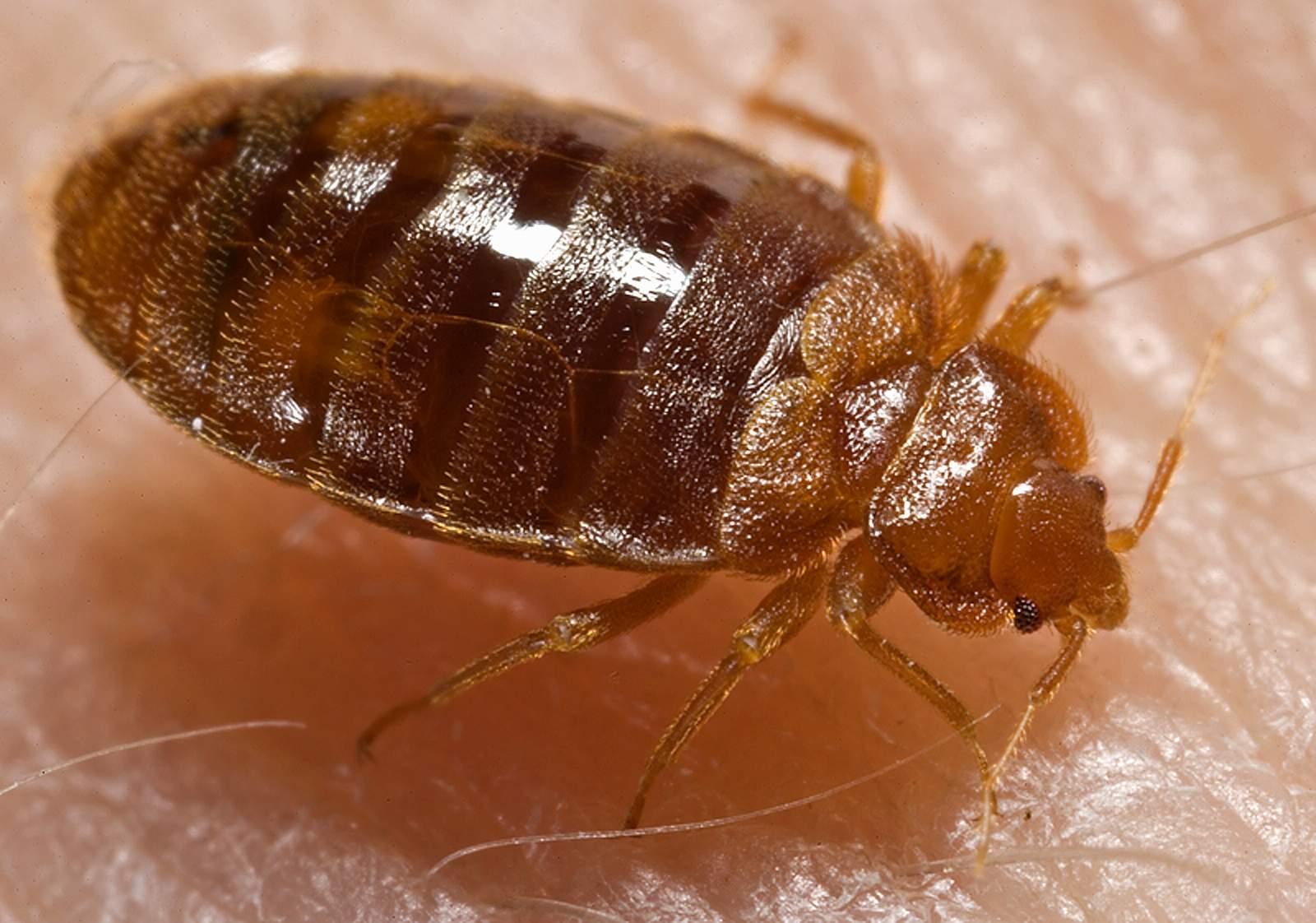 parazita v posteli oxolin kenőcs papillómák ellen