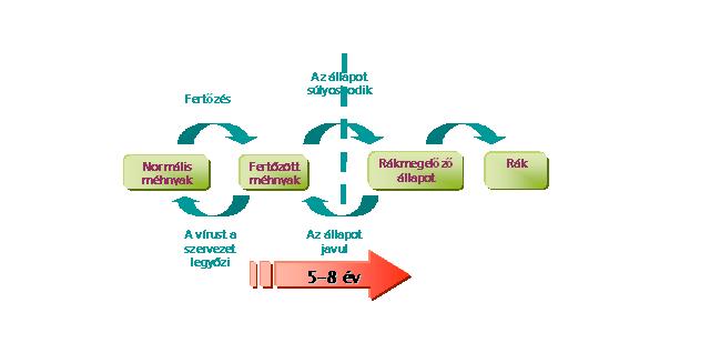 hpv magas kockázatú DNS-észlelés hogyan működnek a paraziták