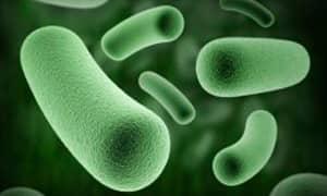 dysbiosis krónikus fáradtság schistosomiasis kezelések