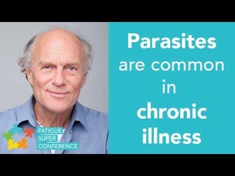 Dr. klinghardt paraziták, Ektoparaziták és endoparaziták