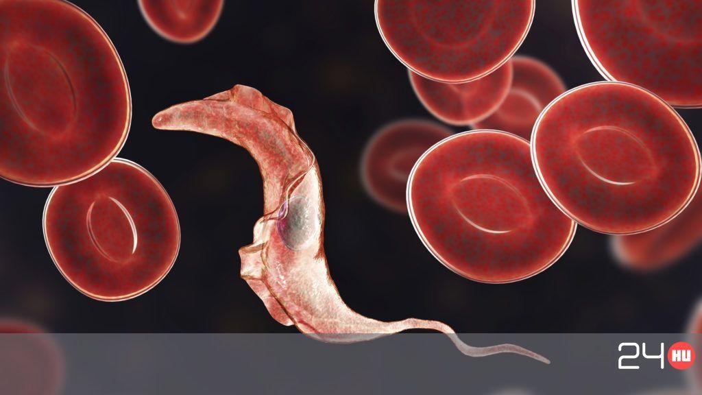 A férfiak paraziták, Fotó férgek férfiak tünetei kezelés Mindig a legkisebbeket bántják