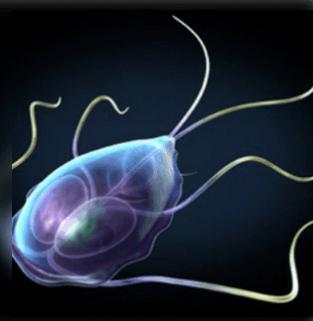 paraziták kezelése az emberi belekben