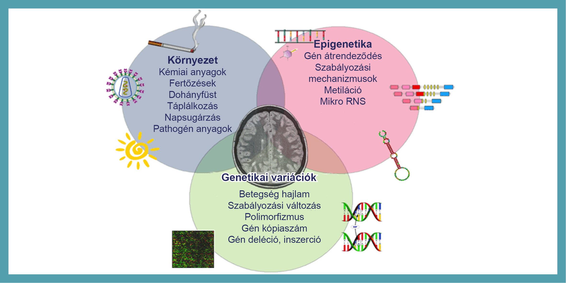 Örökletes génhiba állhat a rák mögött | hilltopfarm.hu