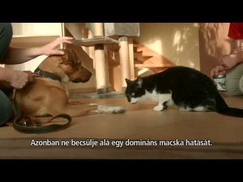 a macska nem eszik férgeket férgek az emberi test kezelésében