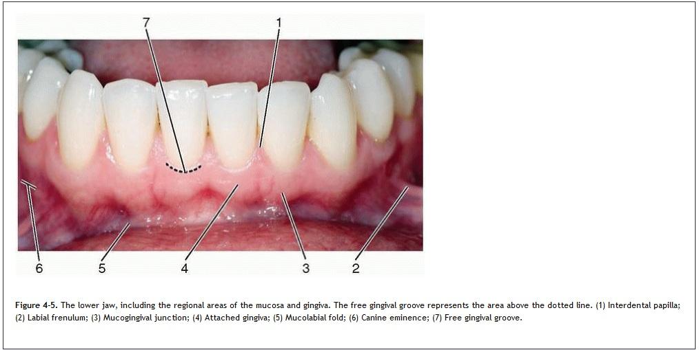 a papilloma a szájban, mivel eliminálódik a hpv vírus immunrendszere starken