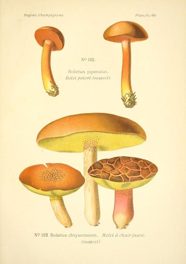 gomba, eső után, régi tölgyfa gombával, gombák, gombaféle | Pikist