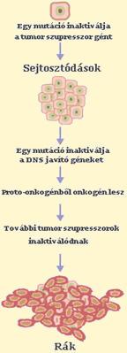 az endometrium rák túlélési arányai
