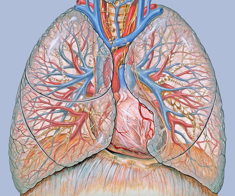 Hogyan kezelhető sikeresen egy négyes stádiumú tüdődaganat? | hilltopfarm.hu
