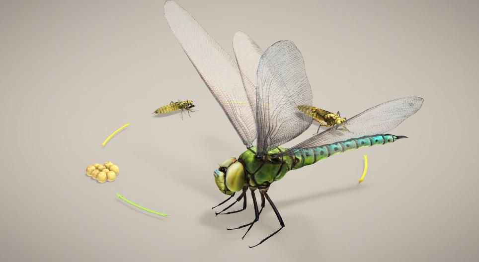 rovarok a petékből