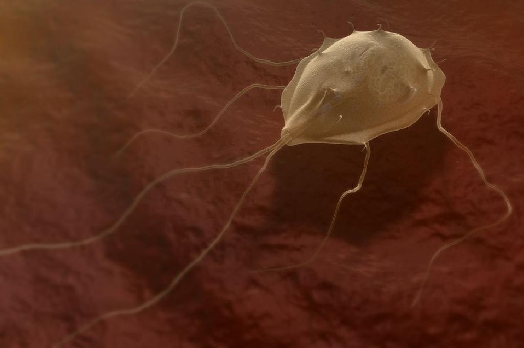 Giardia tratament natural Giardia paraziták