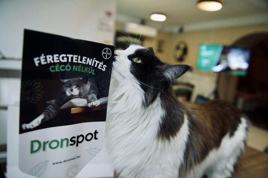 a macska nem eszik férgeket kapart papilloma vírus