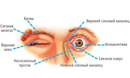 cunnilingus szemölcsökkel a szervezet parazitáinak hatékony gyógymódja