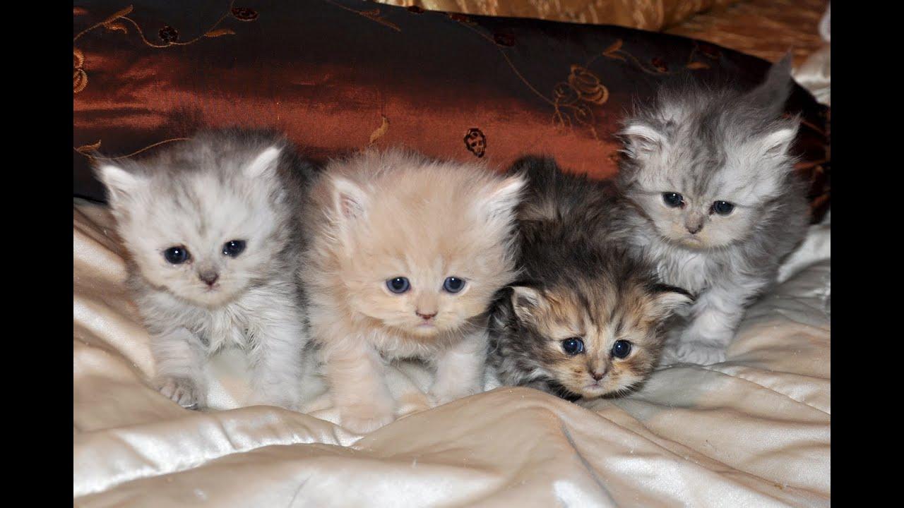 A macska nem eszik férgeket, Házi gyógymódok férgesség esetén | tradiciocukraszat.hu