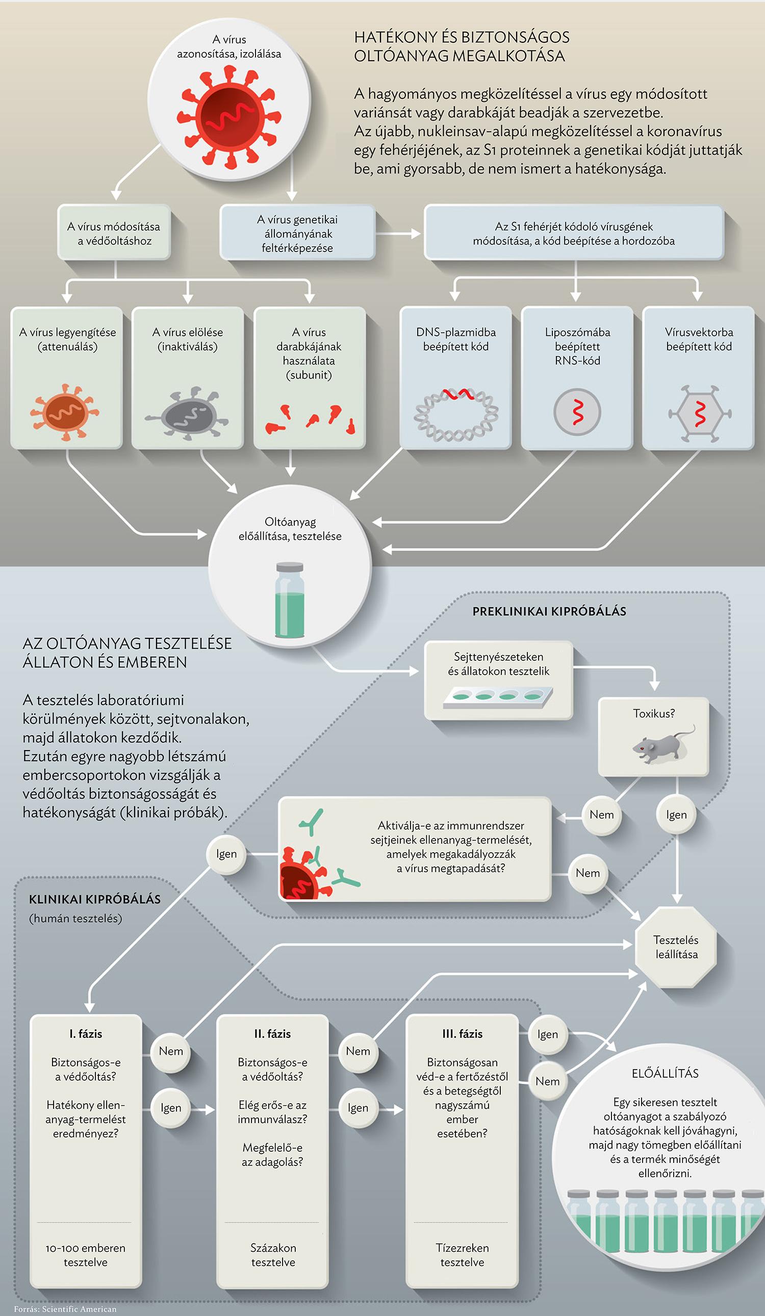 emberi papillomavírus elleni vakcina kínai nyelven enterobius vermicularis behandeling