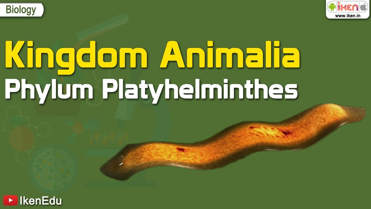Nem parazita platyhelminthes