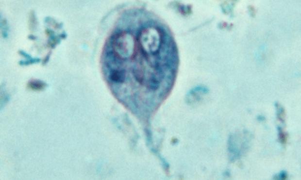 giardia antigén idexx