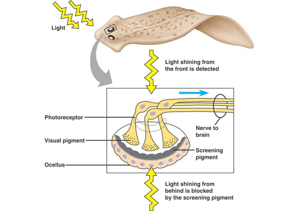 meddig növekszik a condyloma a papilloma duzzadt, amit meg kell tenni