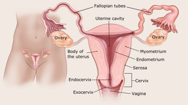 endometrium rák lynch szindróma