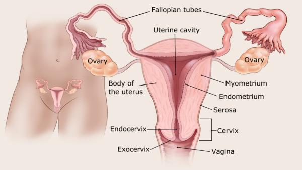 endometrium rák nccn irányelvek hólyag papilloma ember tünetei