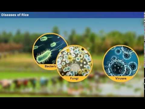 helmintfertőzés antitestek