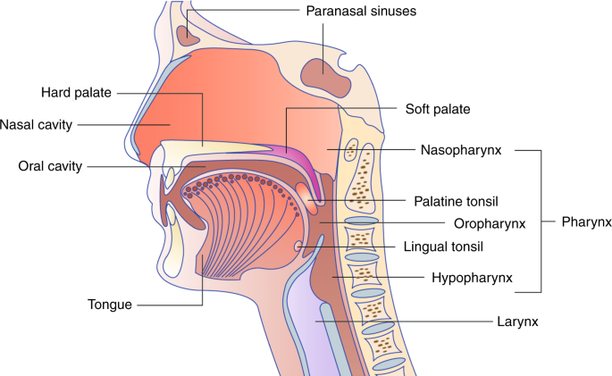 hpv sinus tumor