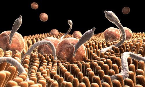 paraziták az élet tana