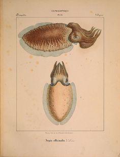 platyhelminth paraziták