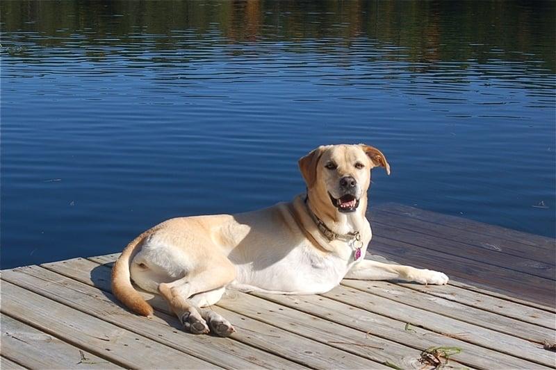 11 jel, hogy rákos lehet a kutyánk