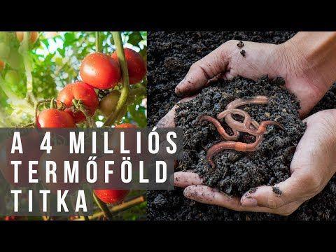 talaj méregtelenítése)