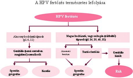 a genitális hpv rákot okozhat vastagbélrák abban a korban