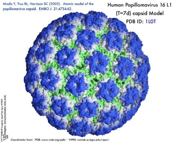 Mi a HPV-fertőzés?
