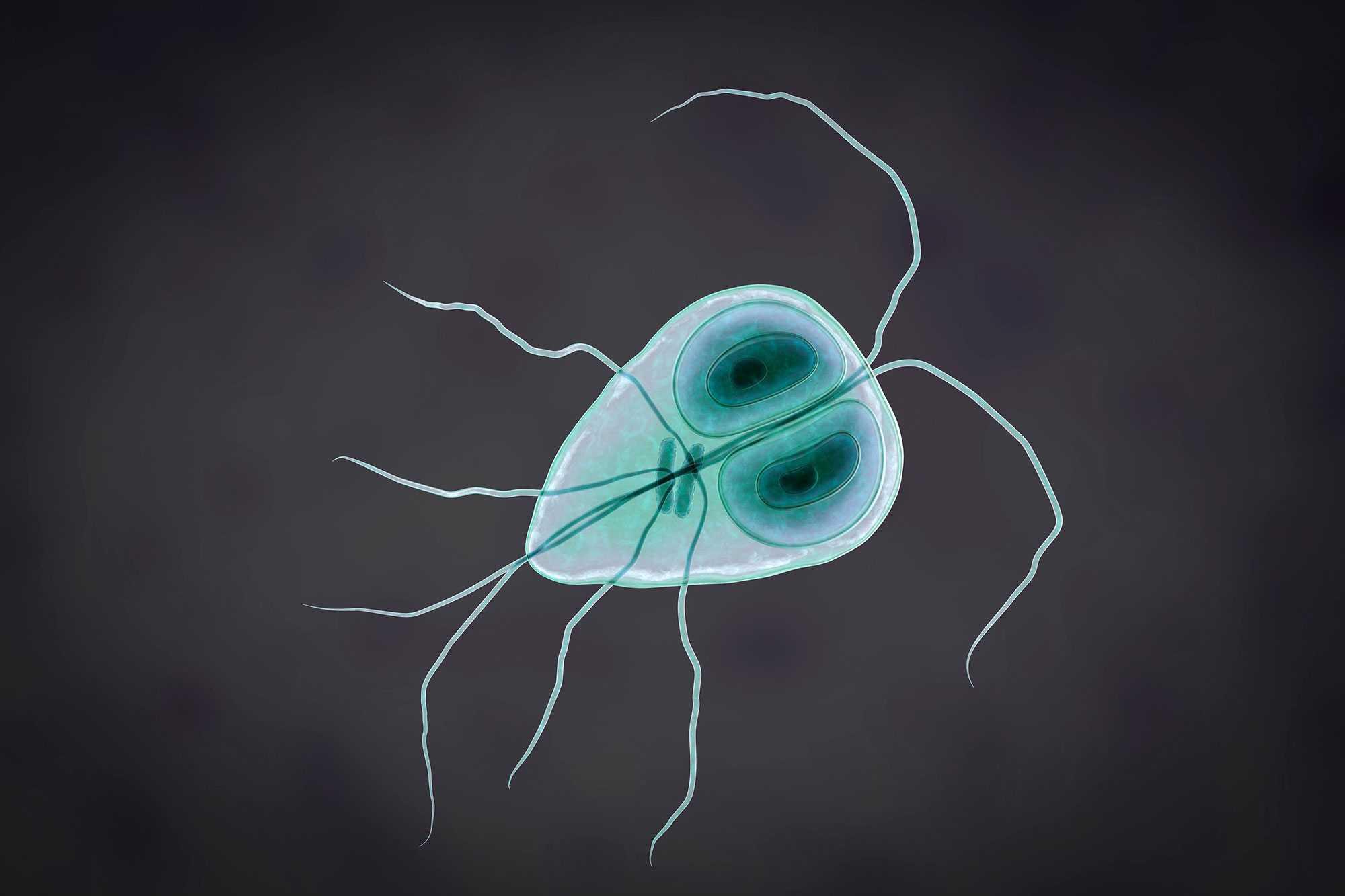 parazita kutatások
