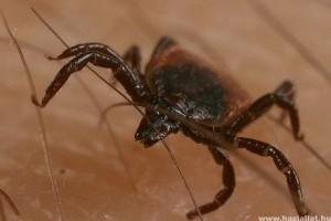 Paraziták tünetei, 12 biztos jele annak, hogy parazita van a testedben | kaiserpizzeria.hu