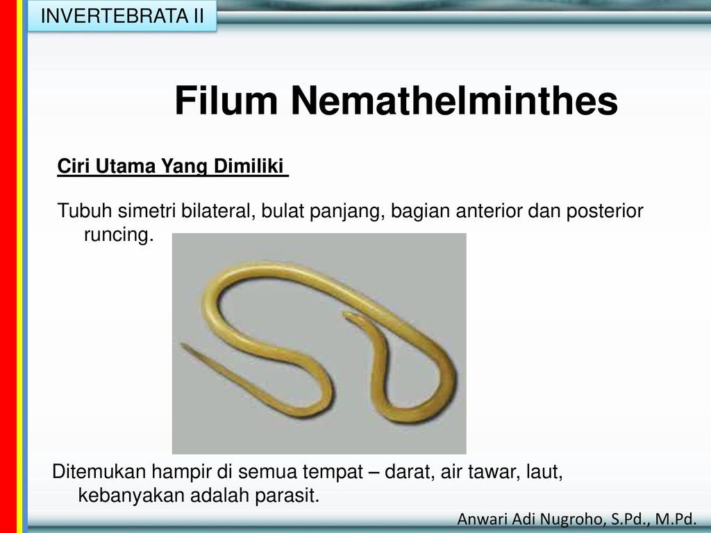 filum nemathelminthes ppt