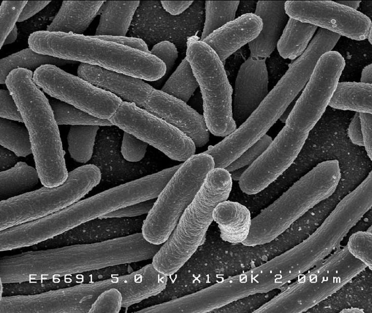 7 haszontalan védekezési mód a bacilusok ellen | Well&fit