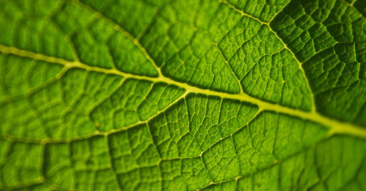 a körömféreg fontossága a természetben hpv vírus szajban